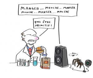blog bd Humour noir araignée