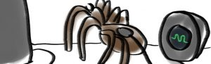 image humour noir araignée