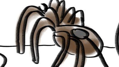 Le langage des araignées enfin compréhensible grâce à un décodeur américain